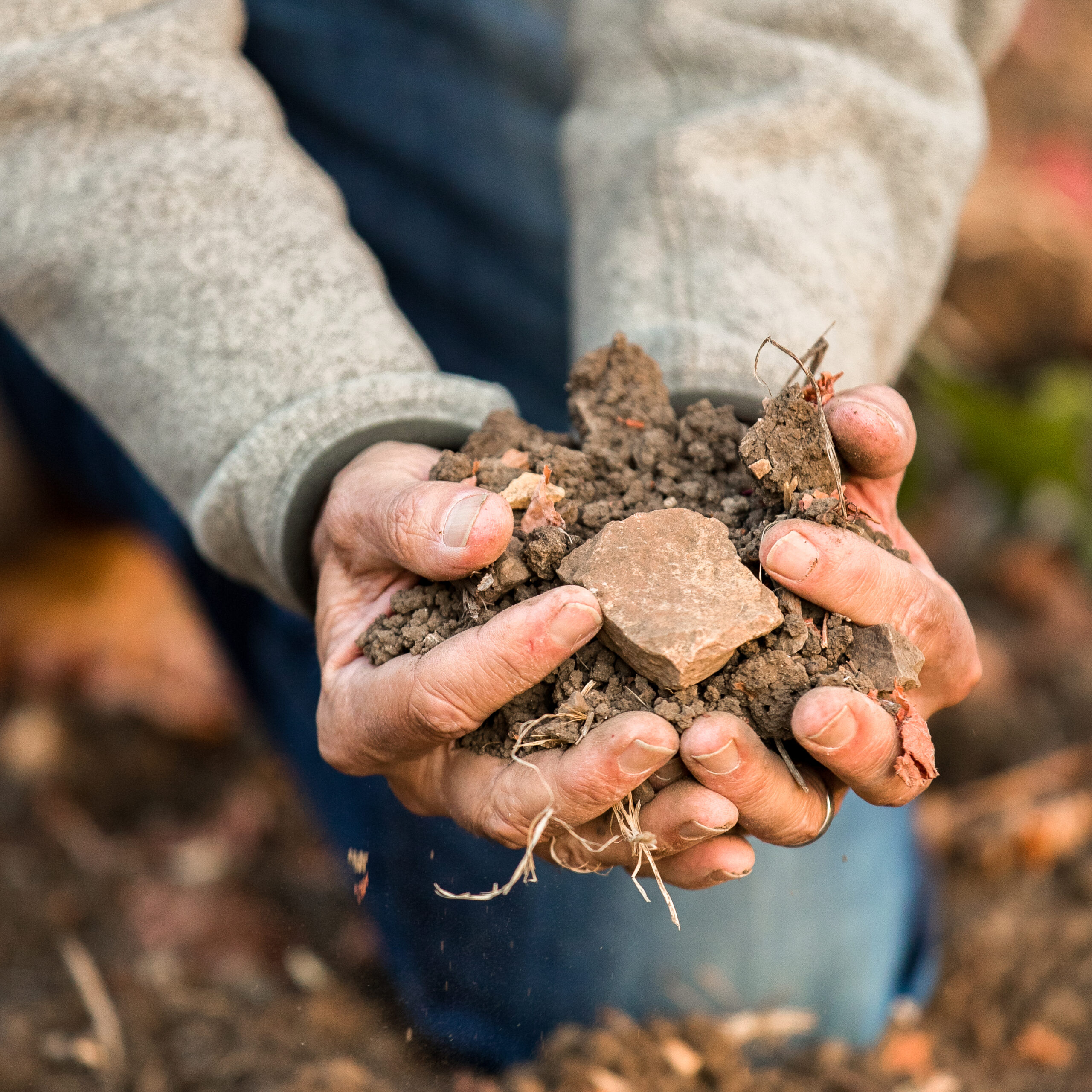 Hands of the vineyard manager holding on to the diverse soils of the Rincon Vineyard in Arroyo Grande, CA.